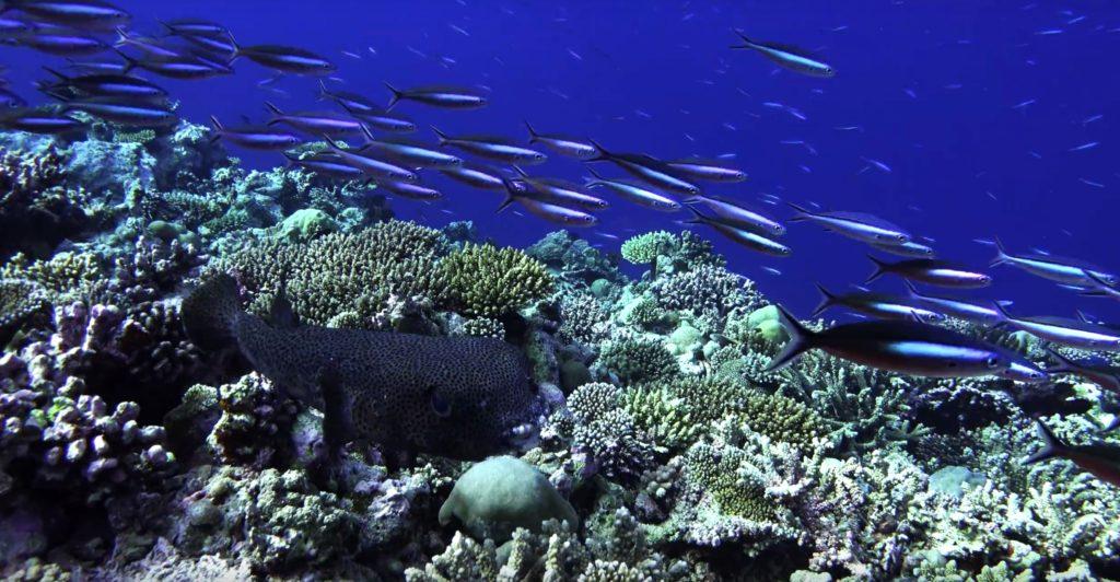 Atollo ari sud soggiorno low cost - Pesci comuni in tavola ...